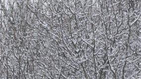 Blizzardsneeuw die - de Winterlandschap vallen stock video