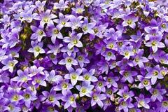Bllue fleurit le fond Photographie stock