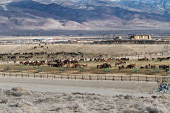 BLM Wild Horse Adoption Facility Stock Photography