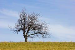 Bloß-verzweigter Baum am Frühjahr Lizenzfreie Stockfotos