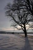 Bloße Bäume stockfoto