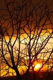 Bloße Bäume Stockbild
