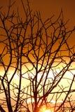 Bloße Bäume Lizenzfreies Stockfoto