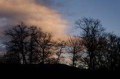 Bloße Bäume Lizenzfreie Stockfotos