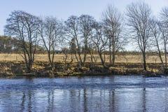 Bloße Bäume auf einer Flussbank an einem sonnigen Wintertag Stockbilder
