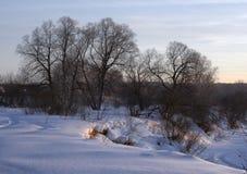 Bloße Bäume auf einer schneebedeckten steilen Bank lizenzfreies stockbild