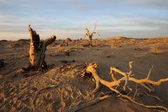 Bloße Bäume in der Herbstdämmerung Lizenzfreies Stockbild