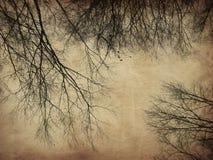Bloße Bäume des Schmutzes Stockbild