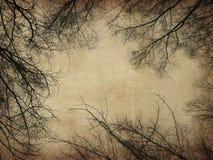 Bloße Bäume des Schmutzes Lizenzfreies Stockbild