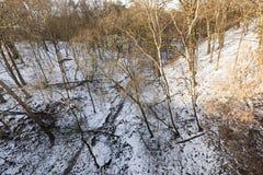 Bloße Bäume, die in einer Schlucht im Winterwald wachsen Lizenzfreies Stockbild