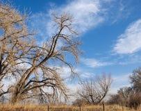 Bloße Bäume im goldenen Morgen-Tageslicht Stockfotografie