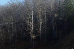 Bloße Bäume im Holz Lizenzfreies Stockfoto