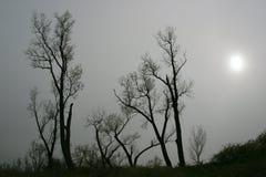 Bloße Bäume im Nebel Stockbild