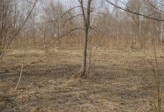 Bloße Bäume im Park Stockbild