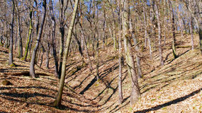 Bloße Bäume im Wald Stockfoto