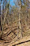 Bloße Bäume im Wald Lizenzfreies Stockbild