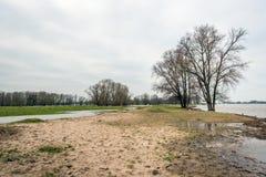 Bloße Bäume im Wasser von einem niederländischen Fluss Lizenzfreies Stockfoto