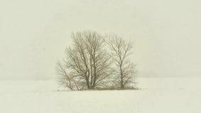 Bloße Bäume im Winter-Schnee-Sturm Lizenzfreies Stockfoto