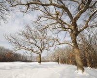 Bloße Bäume im Winterwald Lizenzfreies Stockfoto