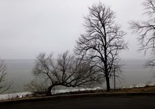 Bloße Bäume mit Fractalniederlassungen in einer kalten Winterseeumwelt und -straße stockfotos