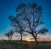Bloße Bäume am Sonnenuntergang Lizenzfreie Stockfotos