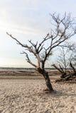 Bloße Bäume und Büsche in den Dünen von Treibsanden Lizenzfreies Stockfoto