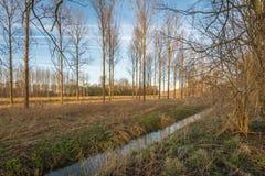 Bloße Bäume und Niederlassungen in einer bunten Landschaft Stockbild
