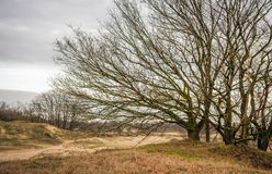 Bloße Bäume und Sträuche mit Wicklungsniederlassungen Lizenzfreie Stockbilder
