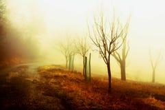 Bloße Bäume und Weg im warmen Herbst gestalten landschaftlich Stockbild