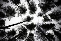 Bloße Baumaste auf einem blassen weißen Hintergrund lizenzfreies stockfoto