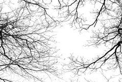 Bloße Baumaste auf einem weißen Hintergrund Lizenzfreie Stockfotos