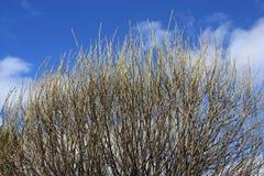 Bloße Baumaste gegen den Himmel Lizenzfreies Stockfoto