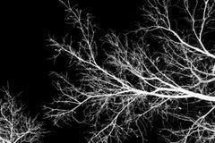 Bloße Baumaste gegen einen schwarzen Himmel Stockfotos