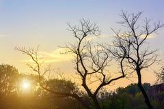 Bloße Baumaste und Sun Stockfotos