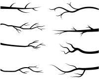 Bloße Baumastschattenbilder stock abbildung