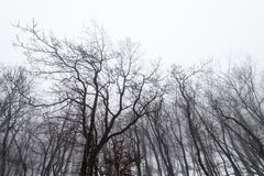 Bloße Baumkronen Stockbilder