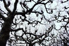 Bloße Baumschattenbilder gegen bewölkten Himmel des Winters Bloße Niederlassungen unter Schnee Einfrierender Tag Nachtfolgend sch Stockfotos