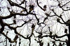 Bloße Baumschattenbilder gegen bewölkten Himmel des Winters Bloße Niederlassungen unter Schnee Einfrierender Tag Nachtfolgend sch Lizenzfreies Stockfoto