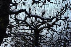 Bloße Baumschattenbilder gegen bewölkten Himmel des Winters Bloße Niederlassungen unter Schnee Einfrierender Tag Nachtfolgend sch Lizenzfreie Stockbilder