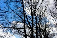 Bloße Baumschattenbilder gegen Hintergrund des blauen Himmels des Frühlinges Lizenzfreies Stockbild
