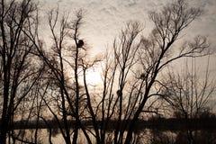 Bloße Baumschattenbilder gegen Sonnenunterganghimmel Lizenzfreies Stockfoto