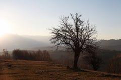 Bloße Baumschattenbildlandschaft Lizenzfreies Stockbild