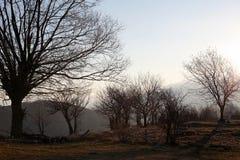 Bloße Baumschattenbildlandschaft Stockbilder