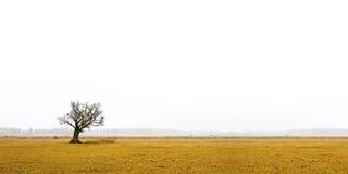 Bloße Eiche in der düsteren Landschaft Stockfotografie