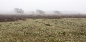 Bloße einsame Bäume sind morgens Nebel, Texel-Insel, die Niederlande lizenzfreie stockfotografie