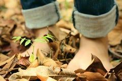Bloße Füße auf trockenen Blättern Stockbilder