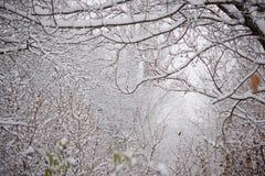 Bloße gefrorene Niederlassungen umfasst mit frischem Schnee Stockfoto