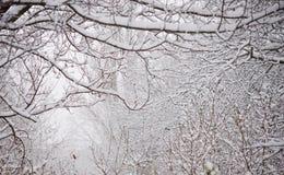 Bloße gefrorene Niederlassungen umfasst mit frischem Schnee Stockbilder
