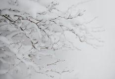 Bloße gefrorene Niederlassungen umfasst mit frischem Schnee Stockfotografie