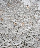 Bloße gefrorene Niederlassungen umfasst mit frischem Schnee Lizenzfreies Stockbild